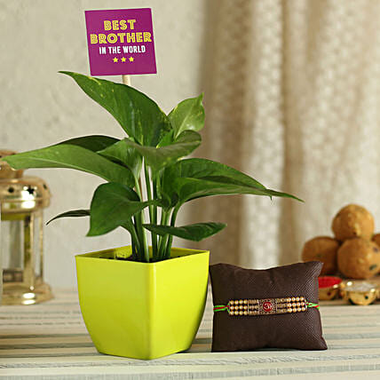 Online Rakhi with Plant For Bhai