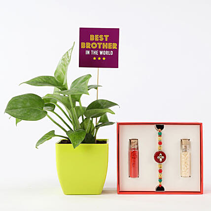 Online Rakhi And Money Plant Combo For Brother