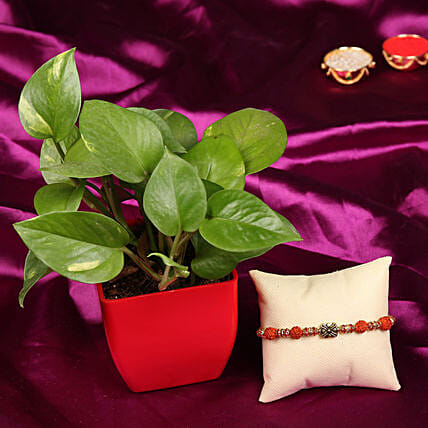 Fancy Rakhi with Plants Combo Online