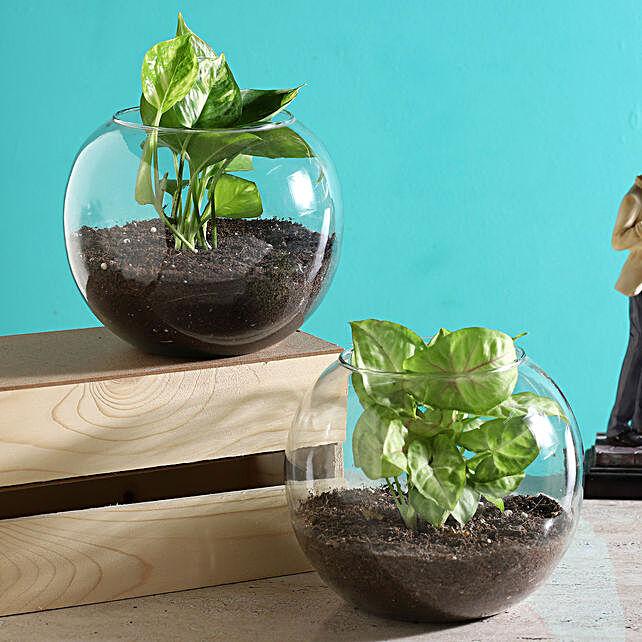 2 set of terrarium online