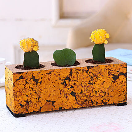 Cactus & Hoya Plant Set In Cork Planter