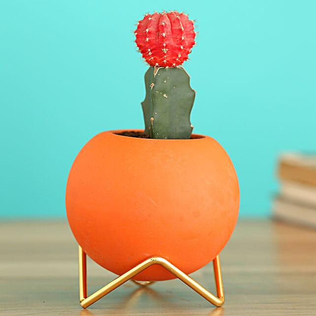 Moon Cactus Plant In Orange Round Planter