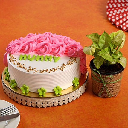 Mothers Day Special Cake Syngonium Plant Combo