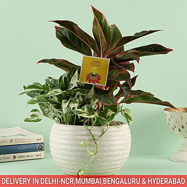 Plant Online For Diwali