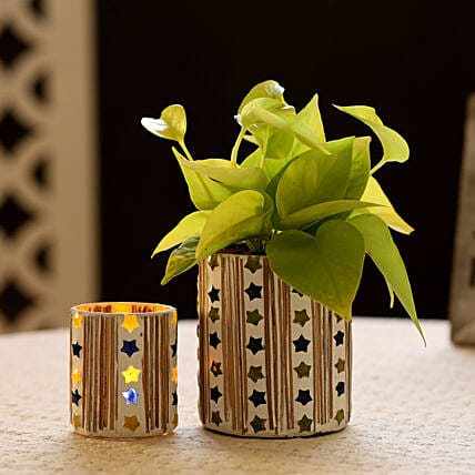 Mosaic Pot and Plant Online