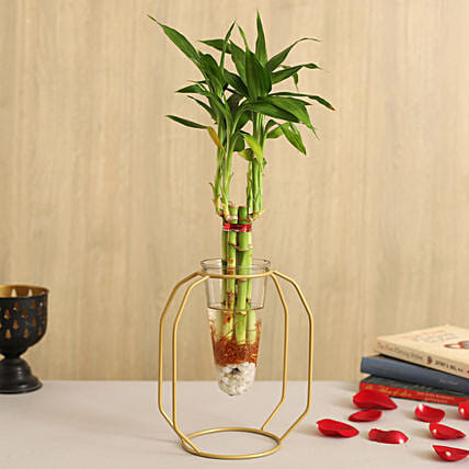 One Layer Bamboo Plant In Clear Cone Yellow Stand