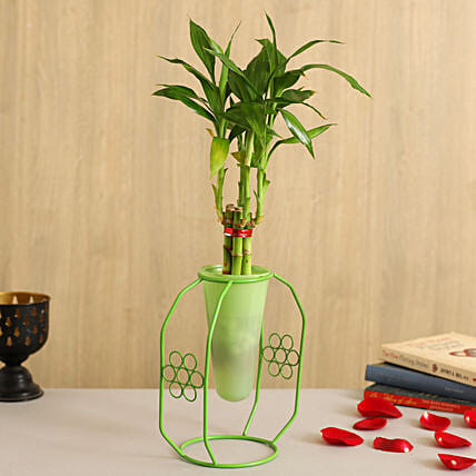 One Layer Bamboo Plant In Green Cone Flowery Stand