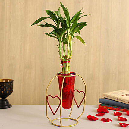 One Layer Bamboo Plant In Red Cone Golden Stand