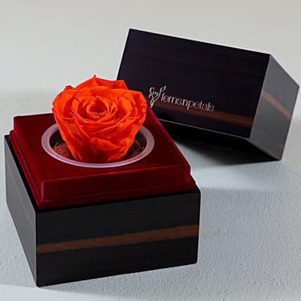 orange infinity rose with wooden box online:Forever Roses