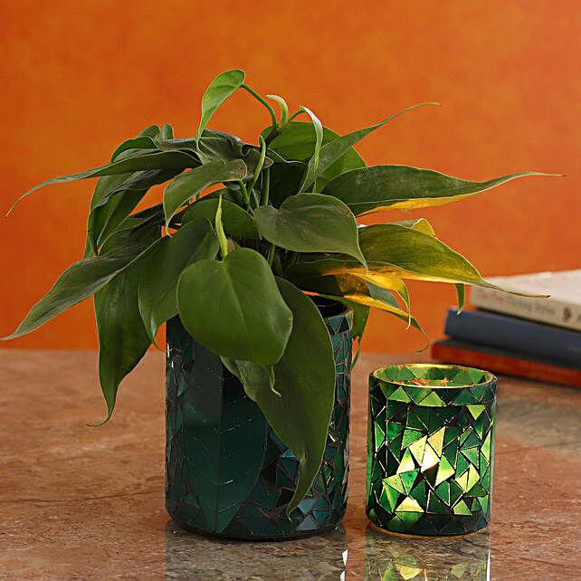 Oxycardium Plant In Leaf Motif Glass Pot And Votive