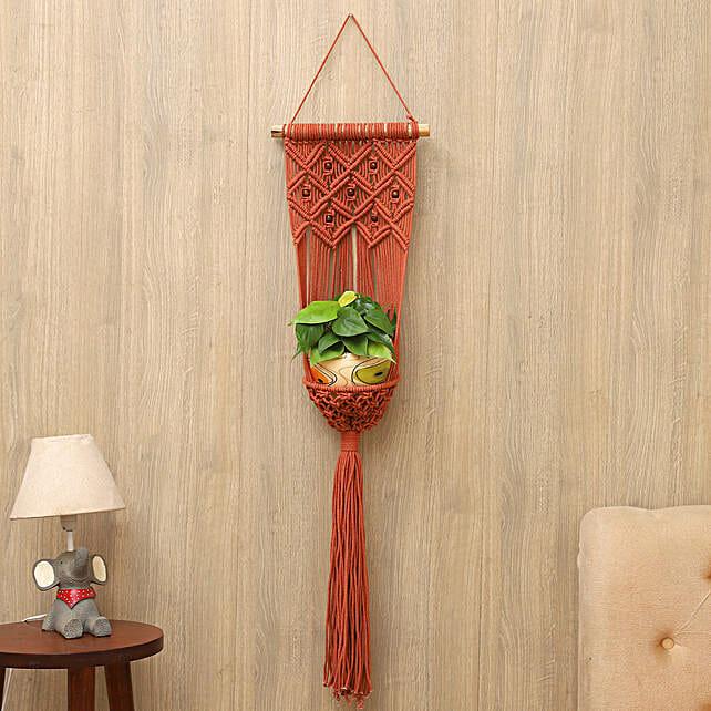 Oxycardium Plant With Beaded Hanging Planter