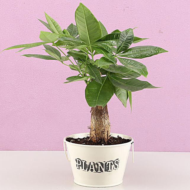 décor plant online