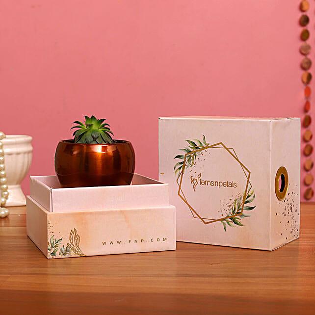 Pachyveria Succulent Plant In FNP Printed Succulent Box