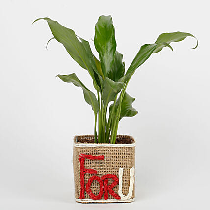 Peace Lilly in Glass Vase For U:Flowering Plants