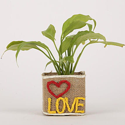 Plant in Love Printed Pot Online
