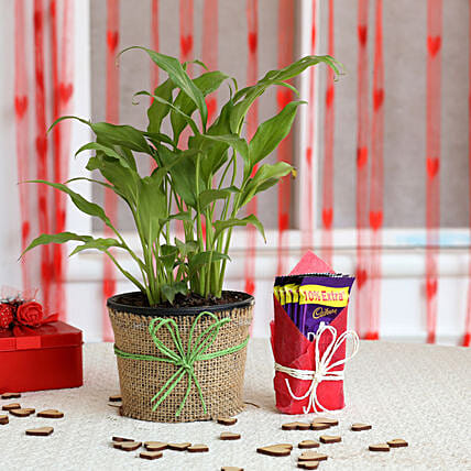 Plant and Chocolate Combo  for valentine:Peace Lily