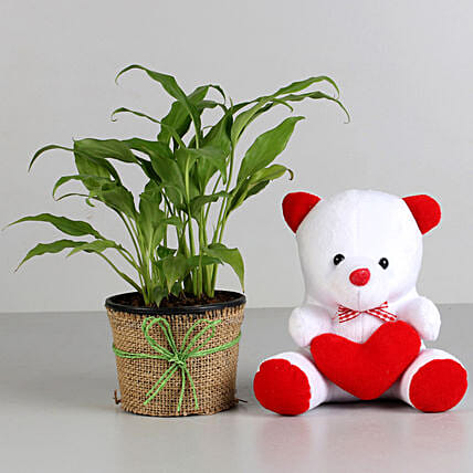 Plant and Teddy Combo for valentine