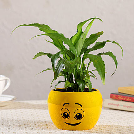 Peace Lily Plant In Cute Emoji Printed Pot