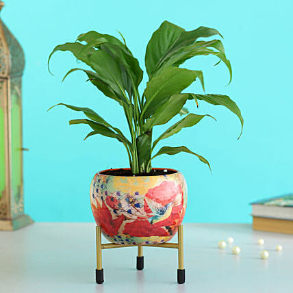 peace lily plant floral printed metal pot:Buy Flowering Plants