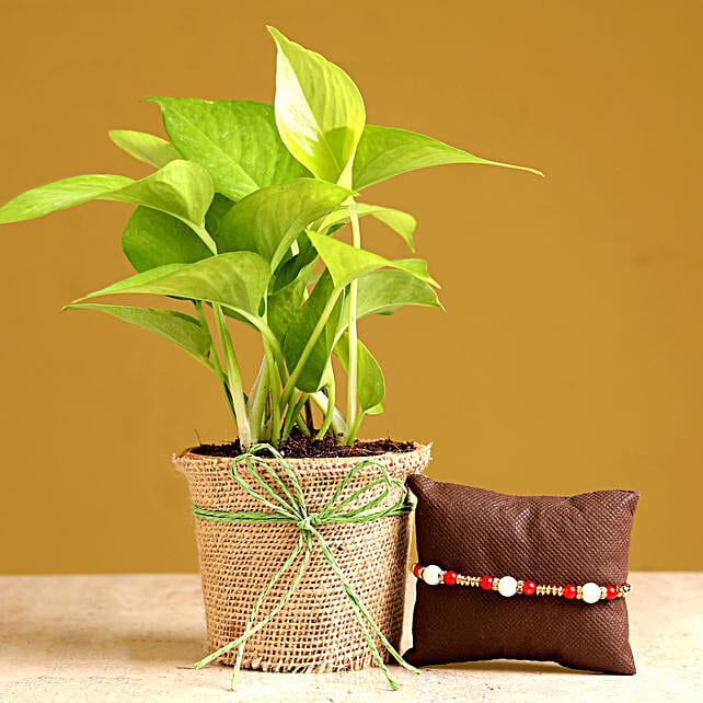 pearl rakhi with money plant online
