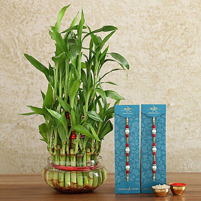pearl rakhi set with plant combo online:Send Rakhi With Plants