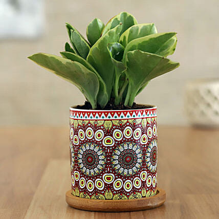 Peperomia Plant In Rangoli Pot With Wooden Plate