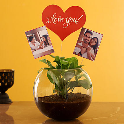 Order Personalised Love Money Plant Terrarium:Air Purifying Plants