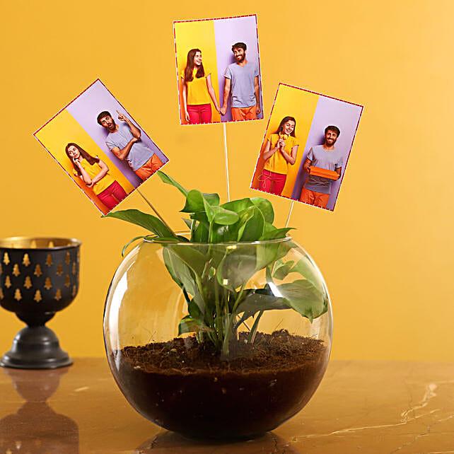 Send Personalised Money Plant Terrarium:Money Tree Plant Delivery