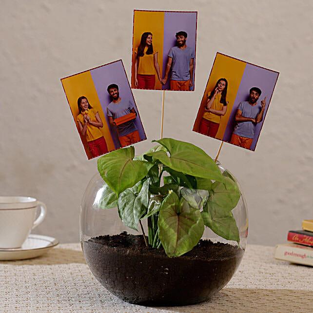 Buy Personalised Plant Terrarium:Plants for anniversary