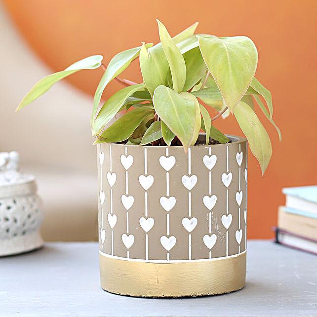 Philodendron Plant In Beautiful Ceramic Pot:Folk Art-planters