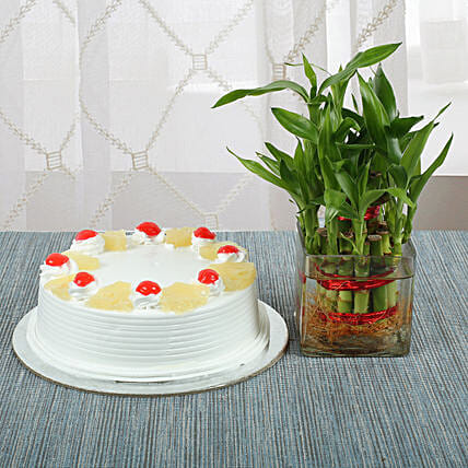 Bamboo with Pineapple Cake:Send Pineapple Cakes