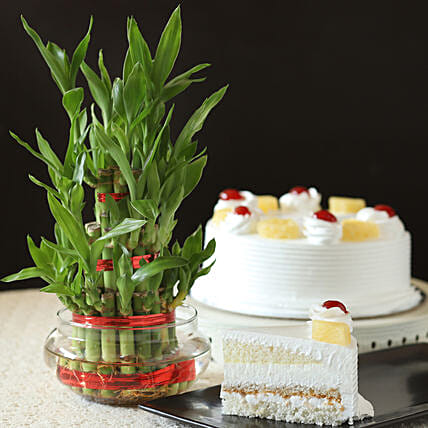 Best Gift Layer Bamboo with Pineapple Cake:Cakes N Plants