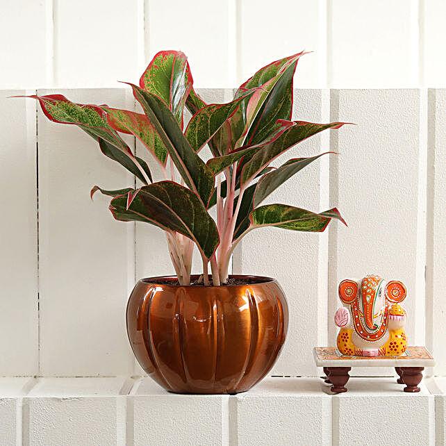 Pink Aglaonema Plant Ganesha Idol