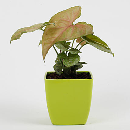 decorative plant for office