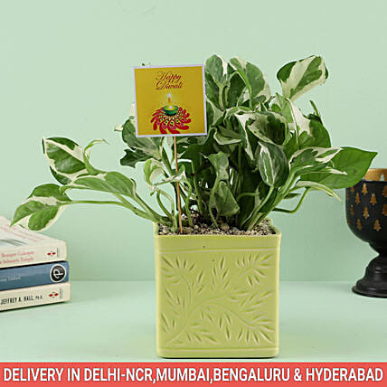 Plant with Beautiful Pot Online