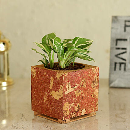 Pothos Plant In Cork Pot Online
