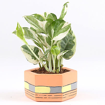 online plant with pot:Concrete Planters