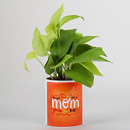 Online Mother's Day Money Plant