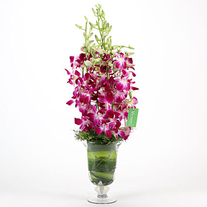 Glass vase arrangement of 10 purple orchids flowers gifts womens day women day woman day women's day