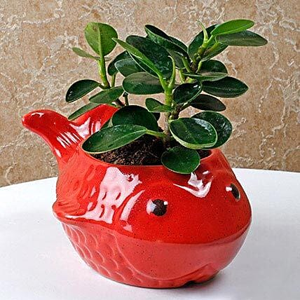 Red fish vase with Ficus