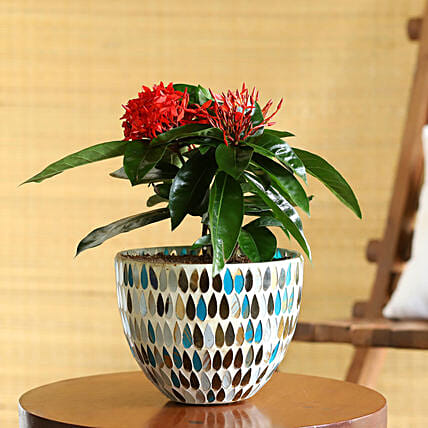 Red Ixora Plant In Mosaic Glass Pot