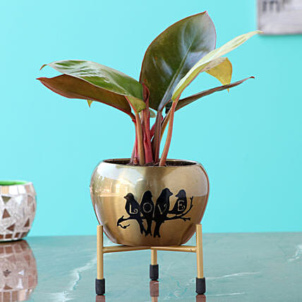 Philondendron Plany in Metal Planter