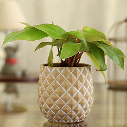 Red Philodendron Plant In Abstract Print Oval Pot:Egyptian Art-planters