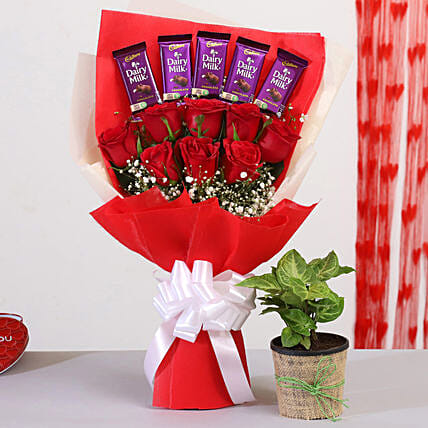 Red Roses Bouquet With Syngonium Plant Dairy Milk:Valentines Day Flowers & Chocolates