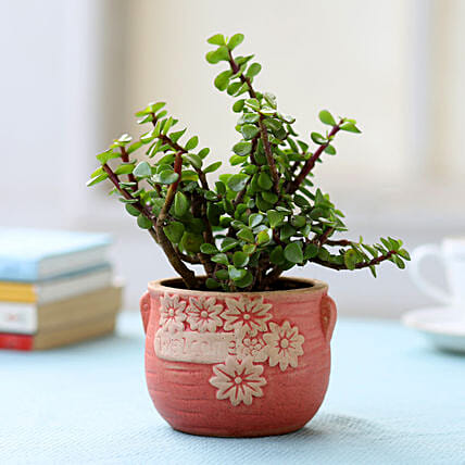 Resin Potted Jade Plant