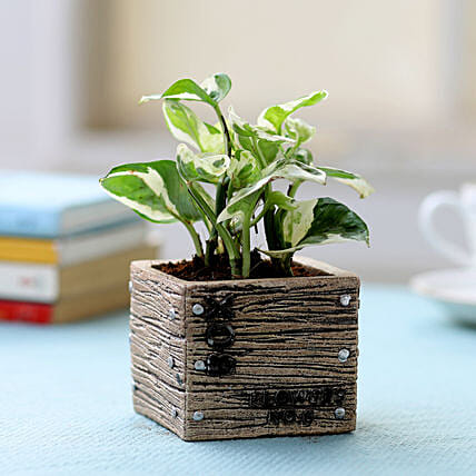 Resin Potted White Pothos Plant