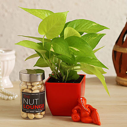 Resting Ganesha With Money Plant & Cashews