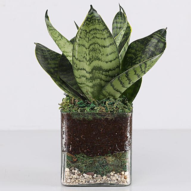 Online  MILT Glass Terrarium:Glass Planters Delivery