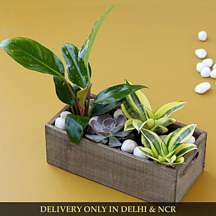 premium plant arrangement for home décor