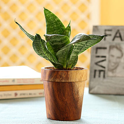 Plant In Beautiful Wooden Planter